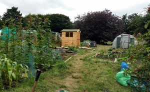 Allotment Now